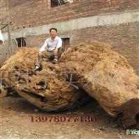供应世界上最大的楠木树瘤