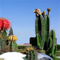 供应仿真植物 设计和施工