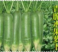 潍坊水果萝卜种子优惠销售