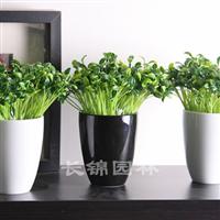 重庆植物租摆公司供应园林绿化