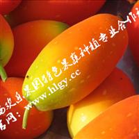 观光农业首选 红参果种苗批发
