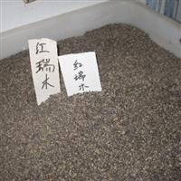 辽宁省红瑞木种子/东北红瑞木种子