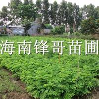 正宗优质的海南黄花梨哪里找?