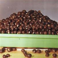 人工精选  文冠果种子