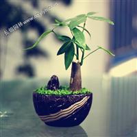 发财树-重庆植物租赁-重庆植物租赁的公司