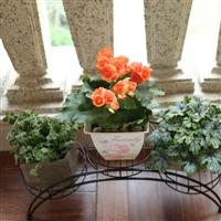 温州家庭庭院室内绿化 小区家庭花园设计