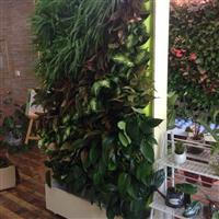 都市绿缘双面落地绿植壁画植物墙屏风