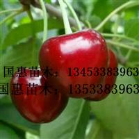 苹果苗,山楂苗,梨树苗,核桃苗,杏树苗