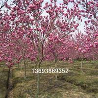 银杏树,枇杷树,香樟,国槐,冬青,桂花,玉兰