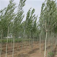 天津八棱海棠栽培技术品牌性价比高