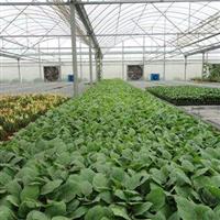 塑料大棚-温室设施-农业专用设备-保温性好