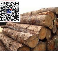 澳大利亚红铁木 铁力木红橡木 铁木原木出口