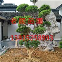 造型瓜子黄杨别墅景观工程苏州光福花木市场