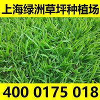 供应四季常青草坪