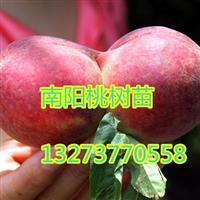 桃树苗批发 桃树苗价格 河南桃树苗批发价格