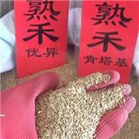 辽宁省早熟禾种子价格一览表