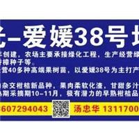 2018冬枣苗冬枣二代1公分9元