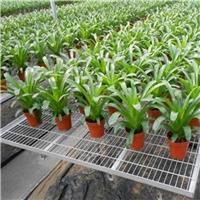 温室育苗专业移动苗床制作厂家价格