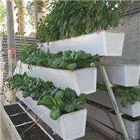 厂家批发抚顺温室草莓立体种植架栽培管理