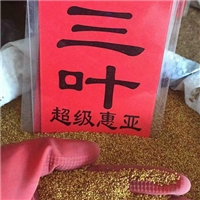 辽宁省三叶种子