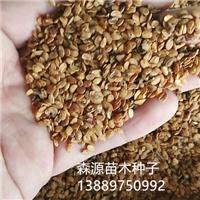 辽宁省红花忍冬种子价格一览表