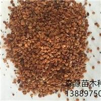 辽宁省金银忍冬种子多少钱一斤