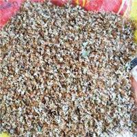 现货批发 白桦种子 北方耐寒品种