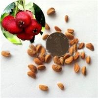 山里红种子批发价格多少钱厂