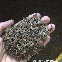 小叶丁香种子厂