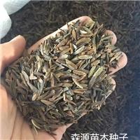 辽宁省小叶丁香种子多少钱一斤厂