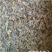 辽宁省小叶丁香种子多少钱一斤
