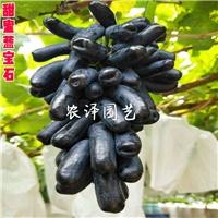 甜蜜蓝宝石葡萄怎么样?蓝宝石葡萄苗价格