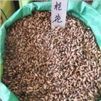 江西桂花种子价格 桂花种子多少钱