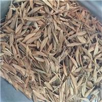 辽宁省 糖槭种子 新货供应厂