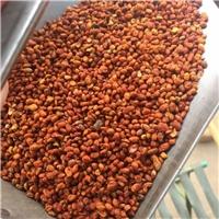 今年新�� 丝绵木种子 发芽率高厂