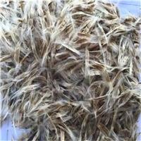 辽宁省 梧桐种子 厂家批发价格多少钱