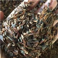 供应 紫丁香种子 厂家直销批发价格厂
