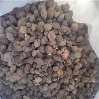 供应 山杏种子 厂家直销批发价格厂