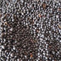 辽宁省水腊种子东北水蜡种子厂