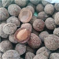 东北 京桃种子 多少钱一斤