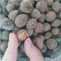 供应 京桃种子 成熟度高  现货批发厂