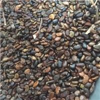 辽宁省 刺槐种子 多少钱一斤