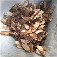 辽宁省茶条槭种子东北茶条槭种子