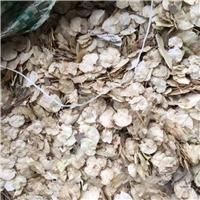 辽宁省 金叶榆种子 多少钱一斤