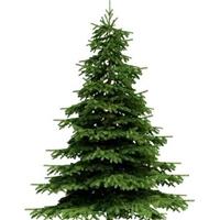 今年新�� 云杉种子 多少钱一斤