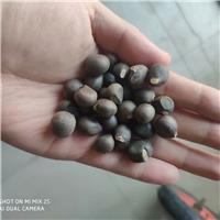 供应 文冠果种子 榨油类品种 高产速生
