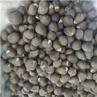 供应 文冠果种子 榨油类品种 高产速生厂