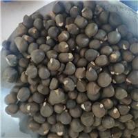今年新�� 文冠果种子 颗粒饱满 发芽率高厂