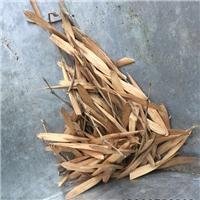 供应 白腊种子 成熟度好 白蜡种子芽率高厂