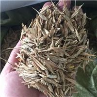 辽宁省 糖槭种子 批发 糖槭树籽